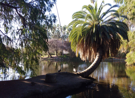 lakeside palm