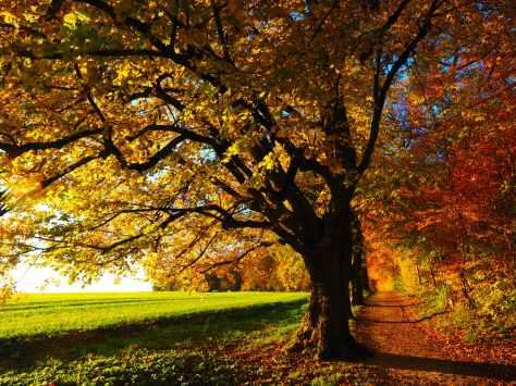 autumn autumn mood colorful edge of the woods